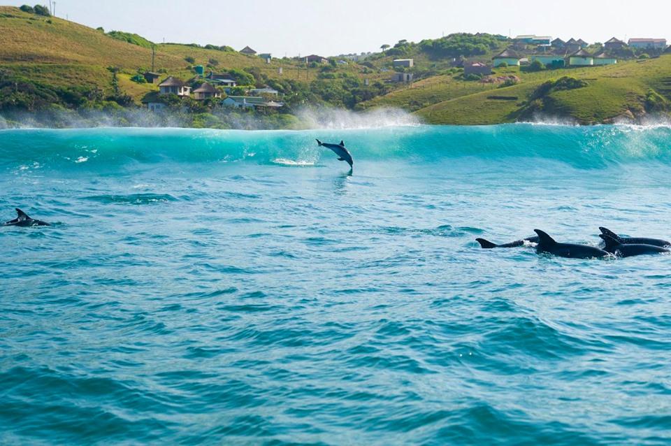 Dolphin Tour Rob Nettleton