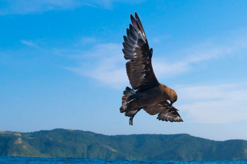 Ocean Bird Rob Nettleton